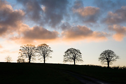 Silhouette of beech trees against a winter sunset.