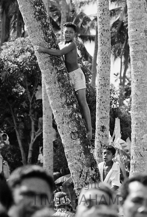 Child climbs tree for vantage point as native people attend tribal gathering in Western Samoa, South Pacific