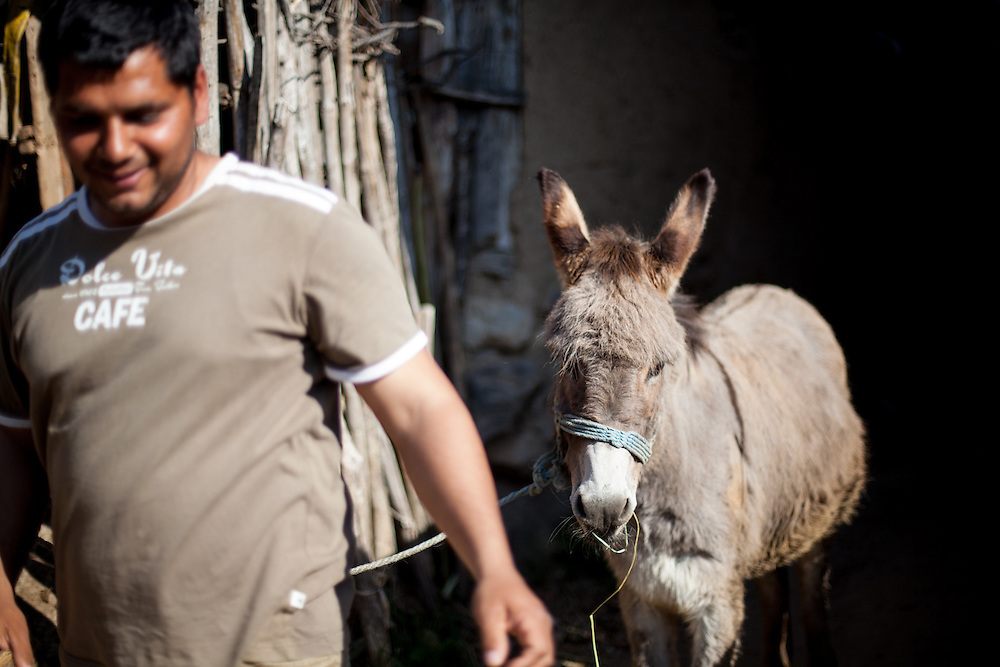 Demirov Dyinei with a donkey at the Roma part of the city of Crnik.