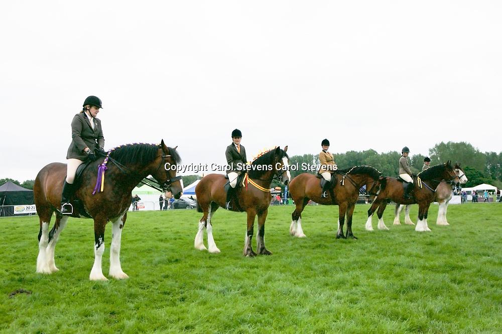 Ridden Heavy Horse Class<br /> Final Line-up