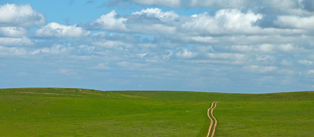 Dirt Road Through the Central Valley Grasslands