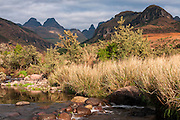 The first greens of spring along the uMlambonja River in the Cathedral Peak area of the Drakensberg.  The river banks are lined with Mtchichi (Leucosidea sericea) the common woody shrub of the Drakensberg.  The major peaks Inner Horn 3005m, Outer Horn 3005m, Bell 2930m and Cathedral Peak 3004m are visible from left to right in the background.  The name uMlambonja (or uMlambonje) means valley of the hungry dog.  uKhahlamba-Drakensberg Park, KwaZulu-Natal, South Africa.