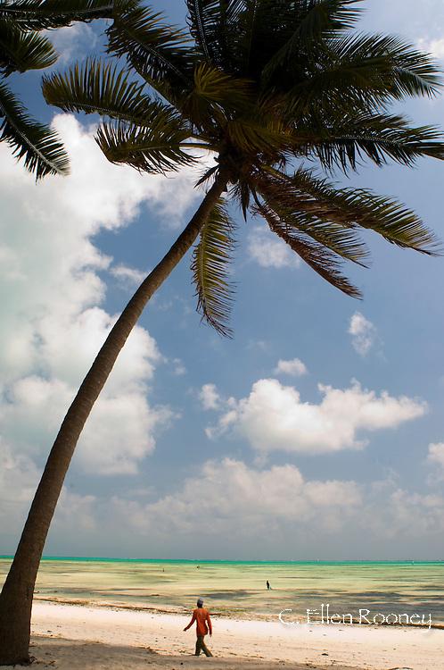 A palm tree above the Jambiani Beach.  Zanzibar, Tanzania