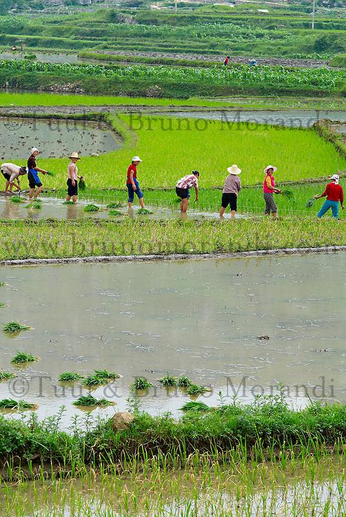 Chine. Province du Guizhou. Riziere. // China. Guizhou province. Rice field.