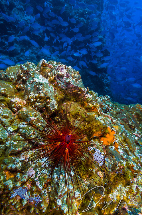 white Island underwater