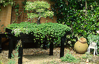 bonsai tree in large planted trough