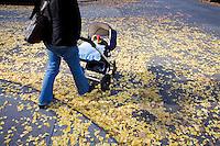 """9 Novembre, 2008. Brooklyn, New York.<br /> <br /> Una madre passeggia col passeggino  per le vie di Park Slope, Brooklyn, NY. Park Slope, spesso definito dai newyorkesi come """"The Slope"""", è un quartiere nella zona ovest di Brooklyn, New York, e confinante con Prospect Park.  Park Slope è un quartiere benestante che ha il maggior numero di nascite, la qualità della vita più alta e principalmente abitato da una classe media di razza bianca. Per questi motivi molte giovani coppie e famiglie decidono di trasferirsi dalle altre municipalità di New York a Park Slope. Dal punto di vista architettonico, il quartiere è caratterizzato dai brownstones, un tipo di costruzione molto frequente a New York, e da Prospect Park.<br /> <br /> ©2008 Gianni Cipriano for The New York Times<br /> cell. +1 646 465 2168 (USA)<br /> cell. +1 328 567 7923 (Italy)<br /> gianni@giannicipriano.com<br /> www.giannicipriano.com"""