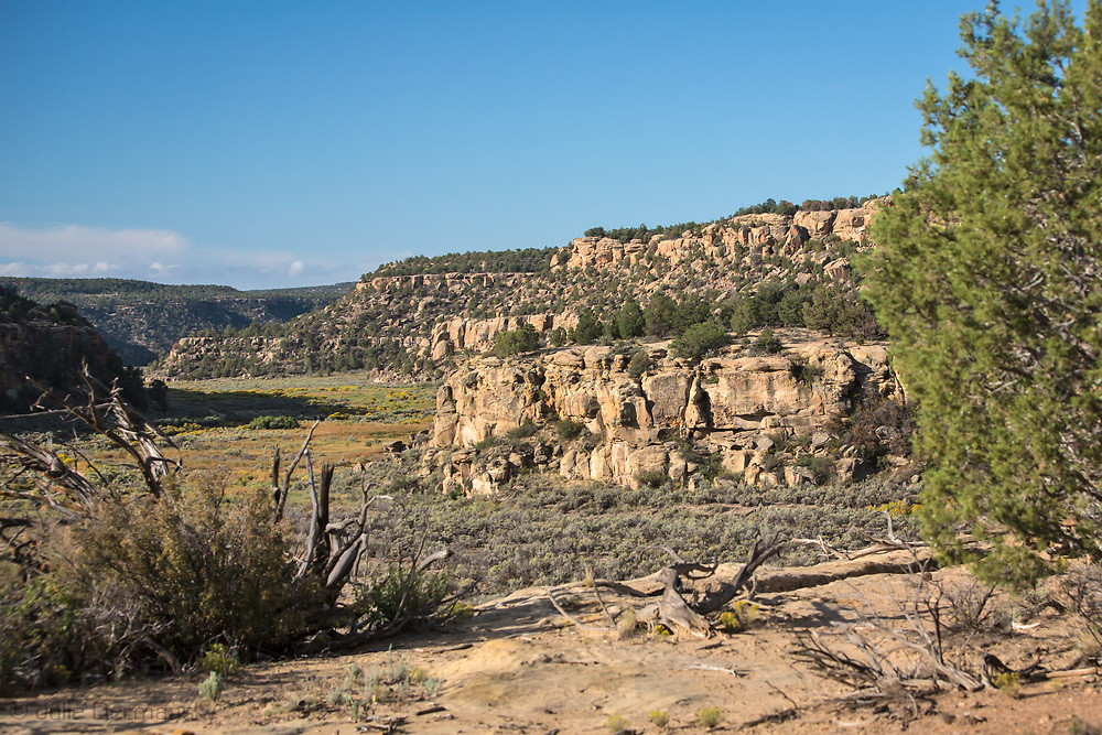 Land on the Schreiber's ranch in Blanco, New Mexico.