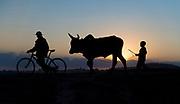 A boy and his bull in Tananarivo, Madagascar