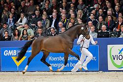 578 - Dance Royal<br /> KWPN hengstenkeuring 2011 - 's Hertogenbosch 2011<br /> © Dirk Caremans