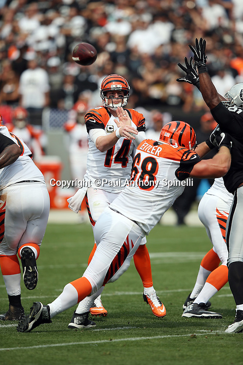 Cincinnati Bengals center Russell Bodine (61) pass blocks Oakland Raiders defensive end Justin Tuck (91) while Cincinnati Bengals quarterback who tries to knock down the ball as Andy Dalton (14) throws a pass during the 2015 NFL week 1 regular season football game against the Oakland Raiders on Sunday, Sept. 13, 2015 in Oakland, Calif. The Bengals won the game 33-13. (©Paul Anthony Spinelli)