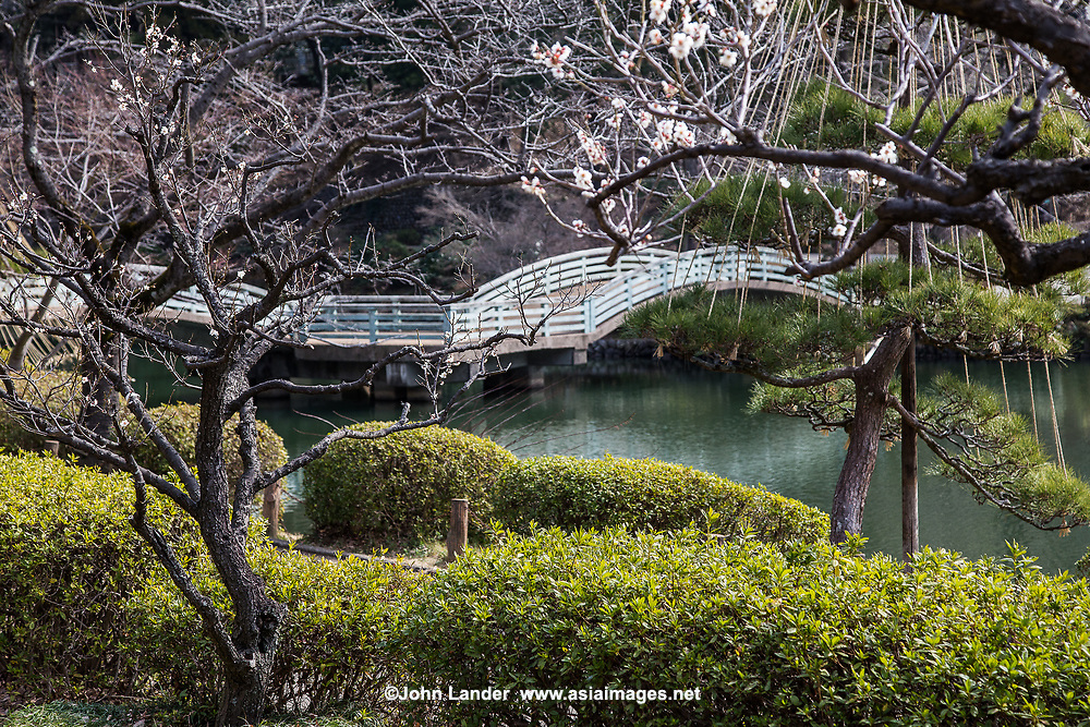 Yakushiike Garden is named after its central pond, Yakushi-ike.  The Pond garden is surrounded by plum and cherry trees, so it is a famous spot in Tokyo for hanami or cherry blossom viewing.  Its unique two tried arched bridge is the centerpiece of the garden. Within the park grounds, there are thatched roof rural houses, former residences of the Nagai and Hagino families that have been preserved.  The park has been designated as a National Designated Cultural Property and a National Place of Scenic Beauty. And one of Japan's top 100 Historical Parks.