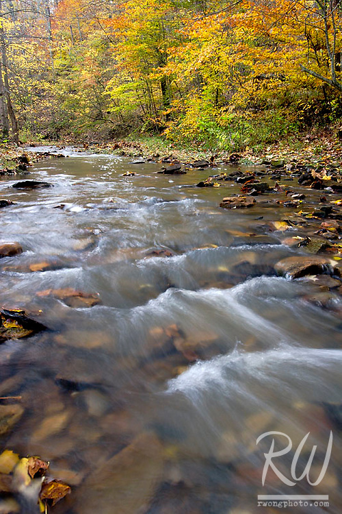 Creek and Fall Colors at Bernheim Forest, Clermont, Kentucky