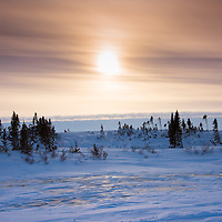 Winter tundra in Wapusk National Park, Manitoba illuminated by diffuse late afternoon light.