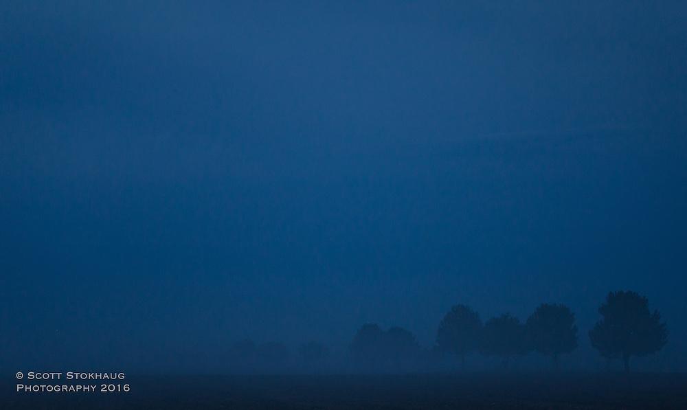 Tree lined field thru the early morning haze