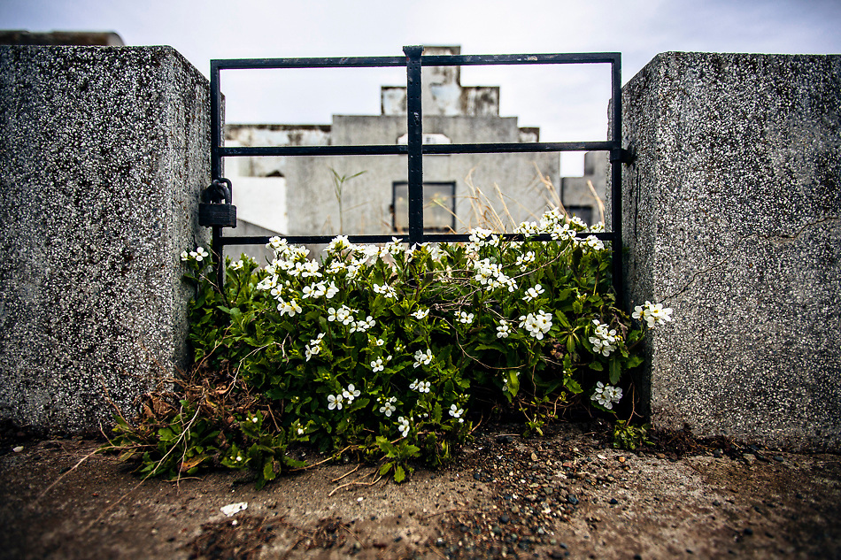 Scenes from the Cemetery in Punta Arenas, Chile