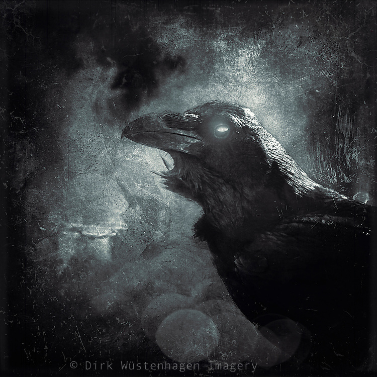 Portrait of a black raven. Texturized photograph