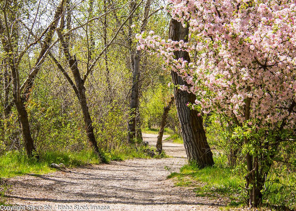 Boise River Greenbelt tree lined pathway along the Boise River, Boise, Idaho