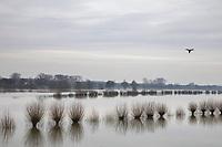 Zutphen, hoogwater in de IJssel. De uiterwaarden staan blank.