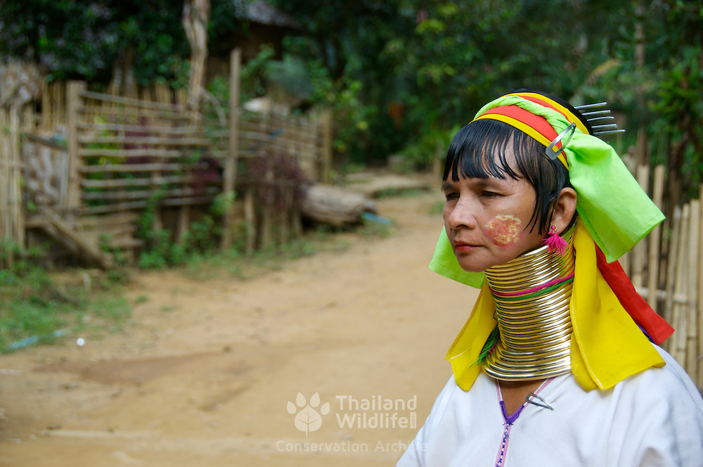Long-Necked Karen (or Pa Dong tribe) is a hill - tribe living deep inside Myanmar border with thailand's Ban Nam Phiang Din. Women of this tribe wear brass rings on their necks and limbs. The number of the rings increases according to their ages. Their should blades are pressed lower and lower while their necks seem to be longer and longer.