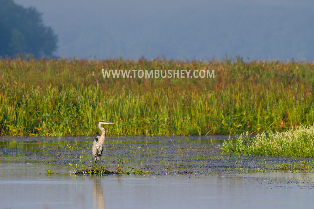 Mamakating, New York - Morning scenes at the Bashakill Wildlife Management Area on Sept. 5, 2014.
