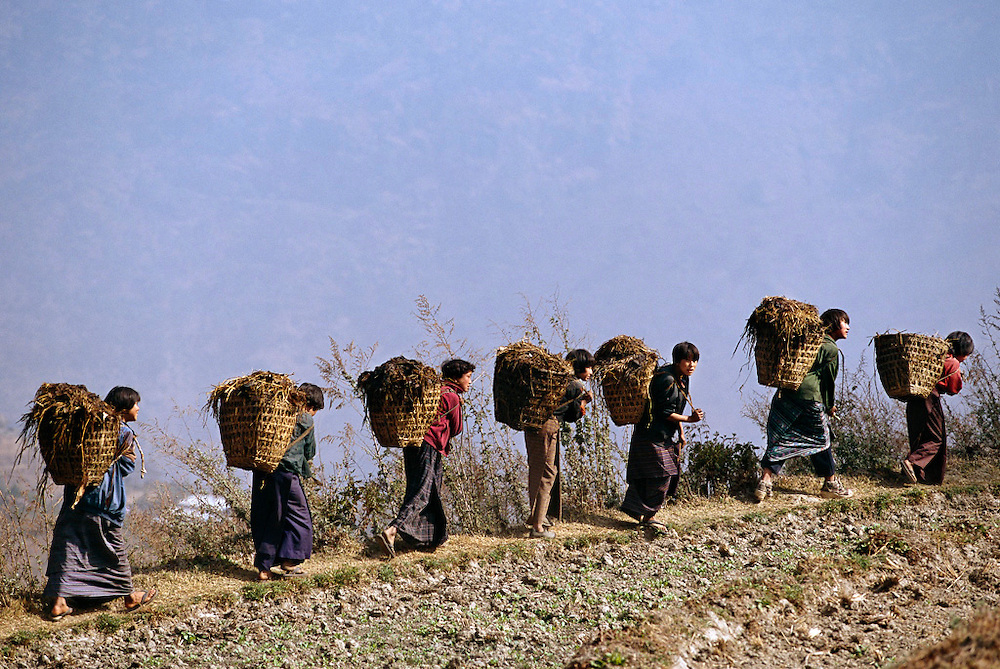 The day after the electrifying celebration in the village, life returns to normal. Singing as they walk, Bangam (third from the right) joins other village girls in collective women's work: cleaning out the manure from the animal stalls under the houses and spreading it on the fallow fields before the men plow. All wear the traditional kira worn by all Bhutanese women: a rather complicated woven wool wrap dress. Men wear a robelike wrap called a gho. Hungry Planet: What the World Eats (p. 45).  The Namgay family living in the remote mountain village of Shingkhey, Bhutan, is one of the thirty families featured, with a weeks' worth of food, in the book Hungry Planet: What the World Eats.