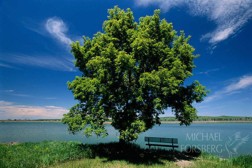Missouri River, Niobrara State Park, Knox County, Nebraska. Ash tree and sitting bench on the bank of the Missouri River.