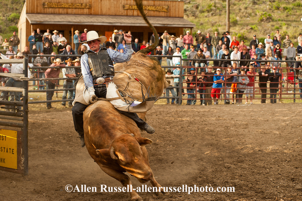 Rodeo, Bull Rider, successful ride, Gardiner Rodeo, Montana