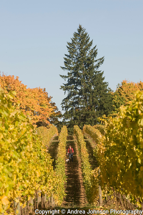 Anam Cara Vineyards, Chehalem AVA, Willamette Valley, Oregon