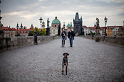 A couple during an early morning walk with their dog at Charles Bridge and the view to Prague Old Town during the change from night to day.