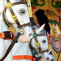Carousel Horses, Surfside Pier, Morey's iers, Wildwood, New Jersey, USA