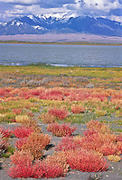 Colorful  vegetation surrounding San Luis Lake during the autumn season.  With the Great Sand  Dunes National Park and the Sangre De Cristo Mountains in the distance.   San Luis State Park, Colorado.