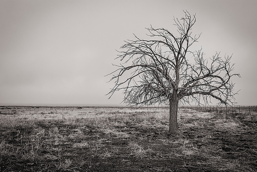 Fine art black and white photograph of a tree on the prarie of eastern Colorado. USA.<br />