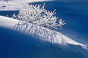 Hoarfrost on vegetation at Isabel Lake<br /> Kenora<br /> Ontario<br /> Canada
