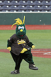 06 July 2013:   Mascot Corny Cornbelter during a Frontier League Baseball game between the Gateway Grizzlies and the Normal CornBelters at Corn Crib Stadium on the campus of Heartland Community College in Normal Illinois
