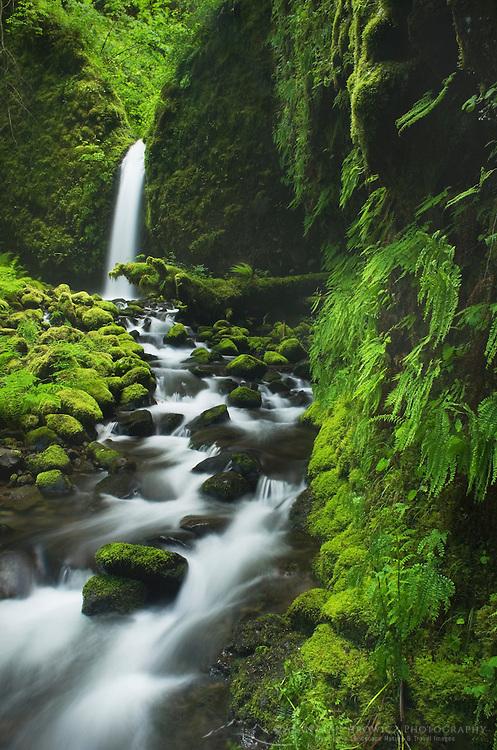 Ruckel Creek waterfall, Columbia River Gorge National Scenic Area