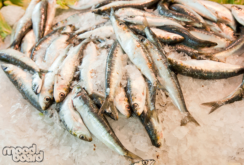 Close-up of fresh fish in ice at market