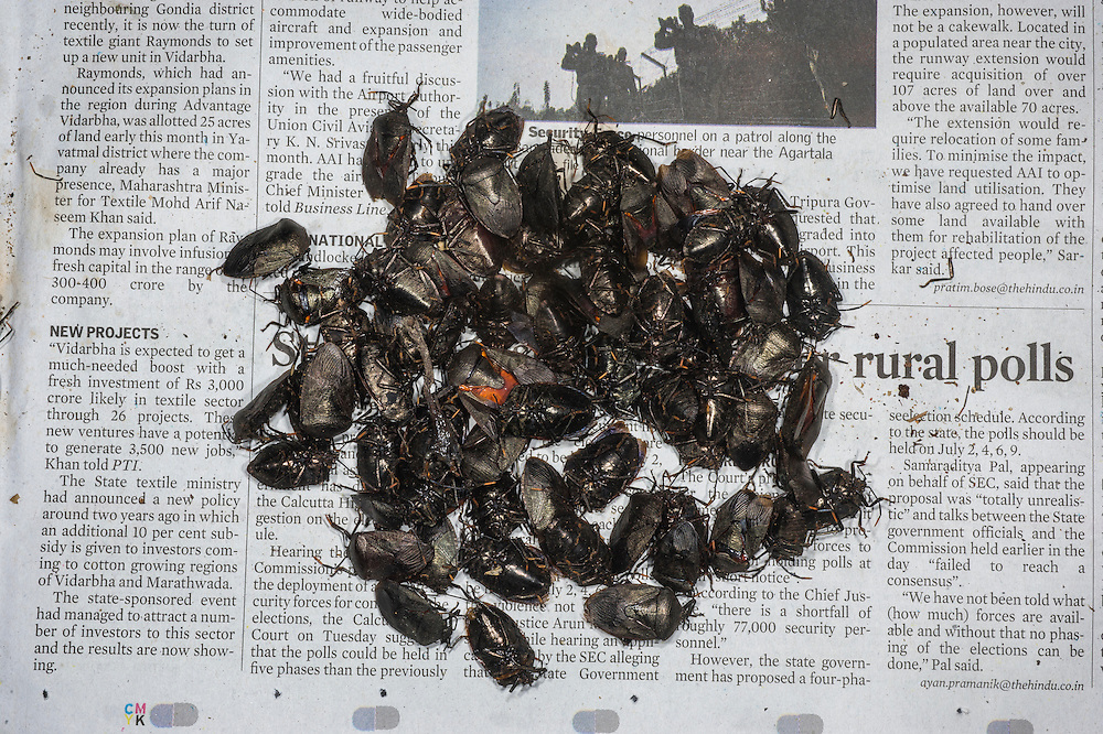 Shieldbugs sold in market for food<br /> Apatani Tribe<br /> Ziro Valley, Lower Subansiri District, Arunachal Pradesh<br /> North East India