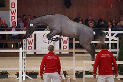 059, Petit Cornet vd Rostal<br /> Hengstenkeuring BWP - Lier 2018<br /> © Hippo Foto - Dirk Caremans<br /> 19/01/2018