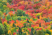 hillside of mixedwood forest in blazing autumn colors<br /> Mississagi Provincial Park<br /> Ontario<br /> Canada