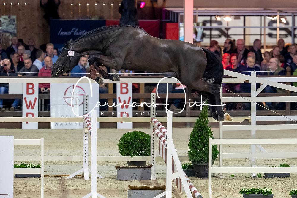 037, Roxinho van't Oud Veldhof<br /> BWP Hengstenkeuring -  Lier 2020<br /> © Hippo Foto - Dirk Caremans<br />  17/01/2020