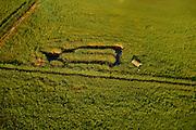Reed beds delta lands near Swinousczje