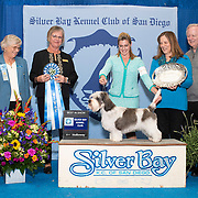 Silver Bay Kennel Club 02/23/2019