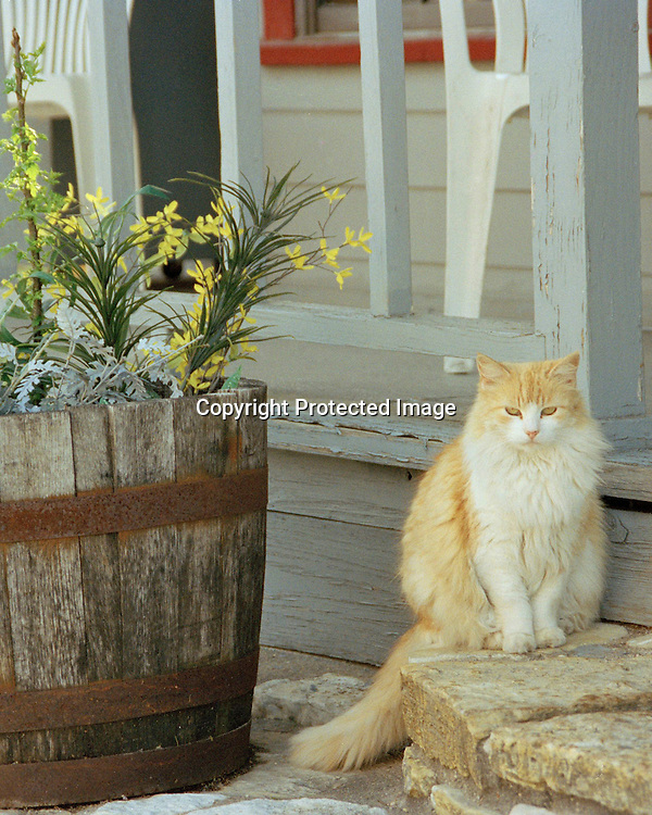 """Cat poses on a porch in Columbus, Texas. NOTE: Click """"Shopping Cart"""" icon for available sizes and prices. If a """"Purchase this image"""" screen opens, click arrow on it. Doing so does not constitute making a purchase. To purchase, additional steps are required."""