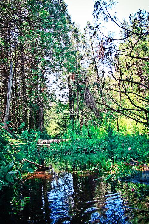 Location: Ockenden Ranch, CA