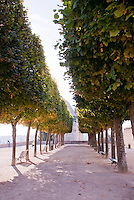 Our Lady of Chartres Cathedral, Chartres, France.  Avenue of trees in the early morning light in the garden behind the cathedral.