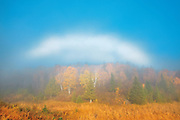 Fogbow over forest in autumn colors<br /> Whiteshell Provincial Park<br /> Manitoba<br /> Canada