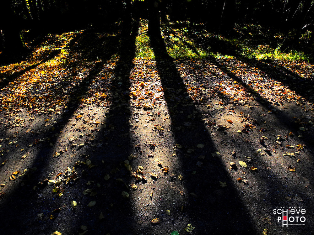 The long shadows of a late afternoon fall sun.