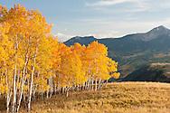 Telluride Aspen Grove