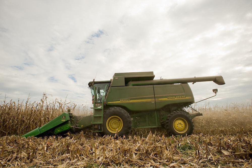 Combine picking corn in the field